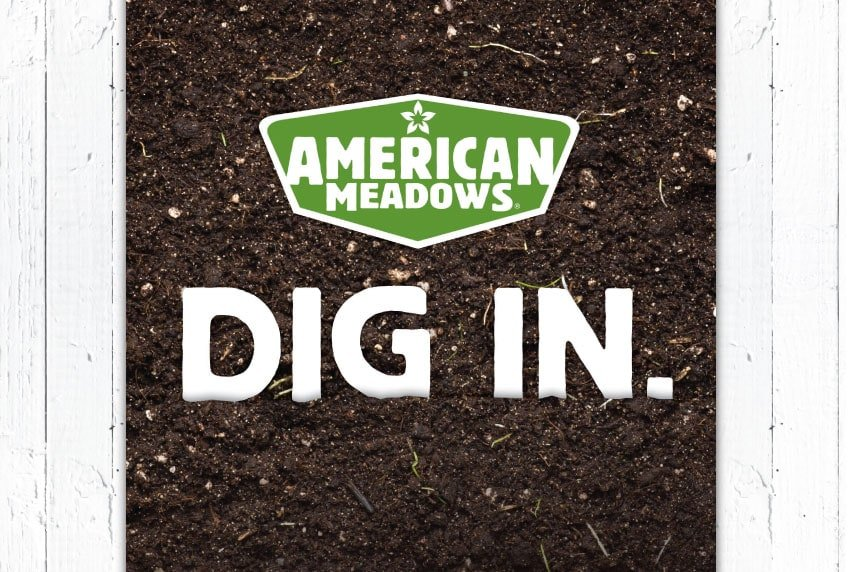American Meadows - Dig In